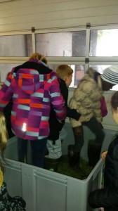 Schulkinder beim Trauben stampfen.