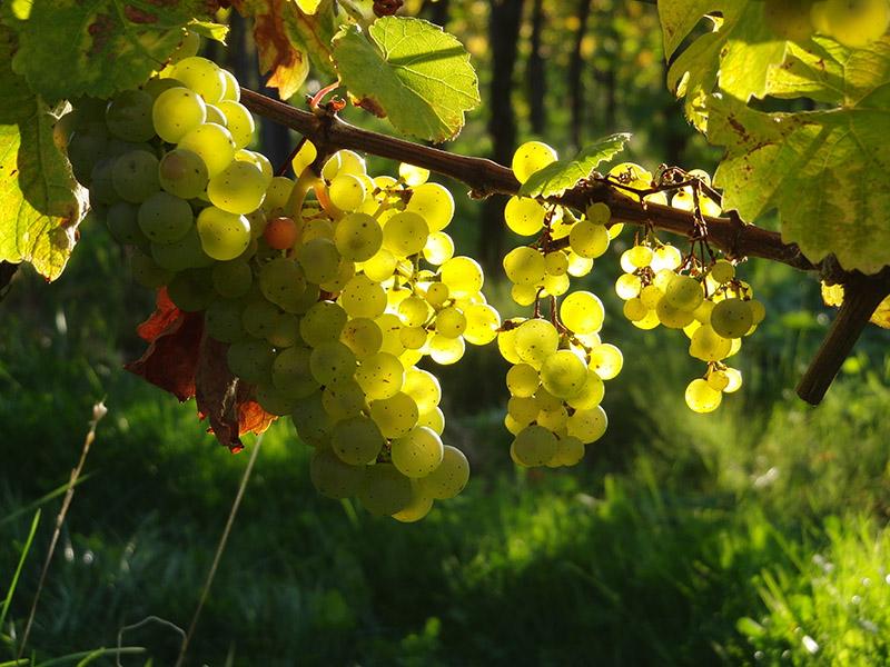 Abonnement Weißwein